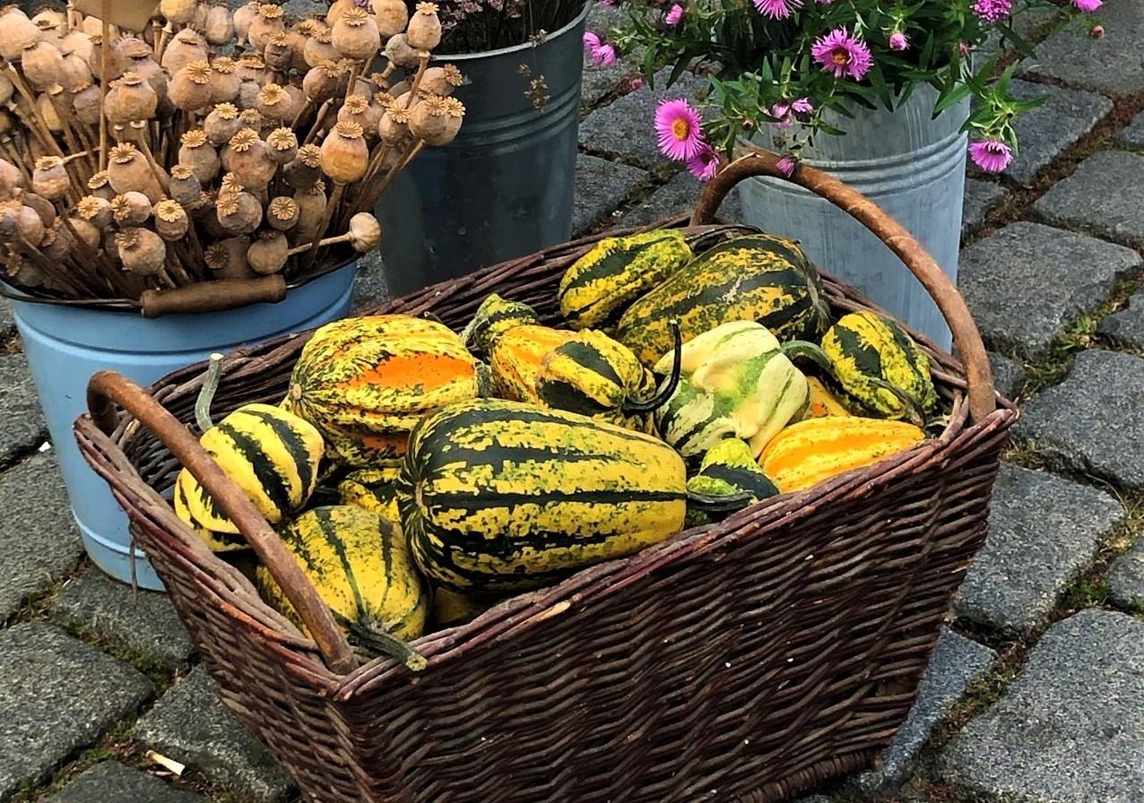 Náplavka 2. 10. – Třebíčský chléb, kozí farmy, zvěřina, květiny, káva a občerstvení, topinky s pestem :)