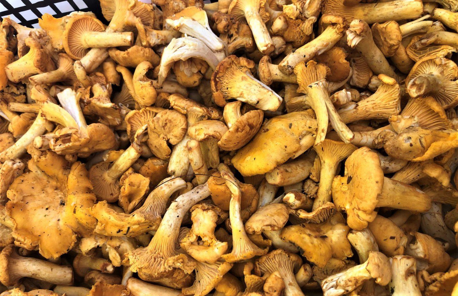 V sobotu 4. 9. je farmářský trh zpět na Náplavce! Budou i lesní houby od Karolínky, drůbež z volného chovu z Pracejovic a Holýšova, pesta od Květušky.